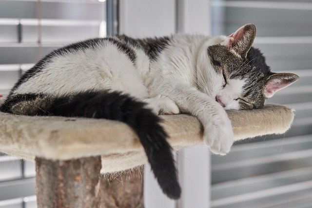 A cat is sleeping on top of a cat tower.