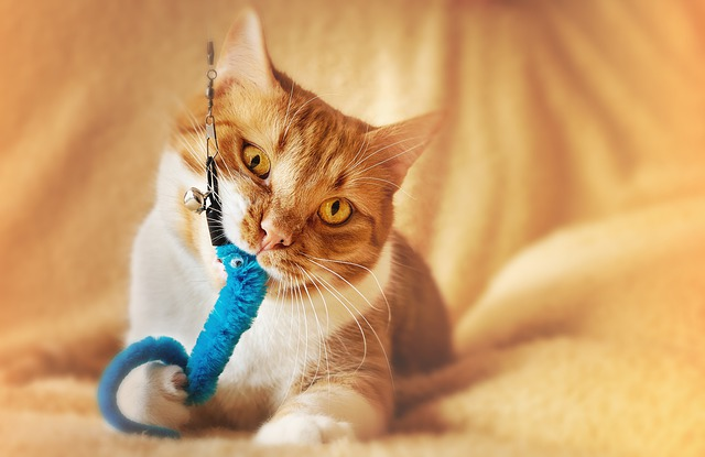 A yellow cat is chewing on a wand toy.